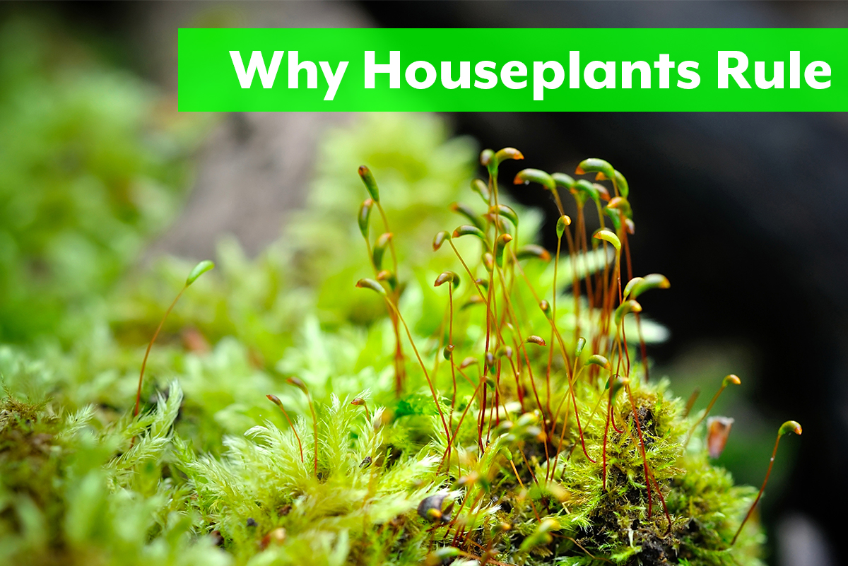 Why Houseplants Rule