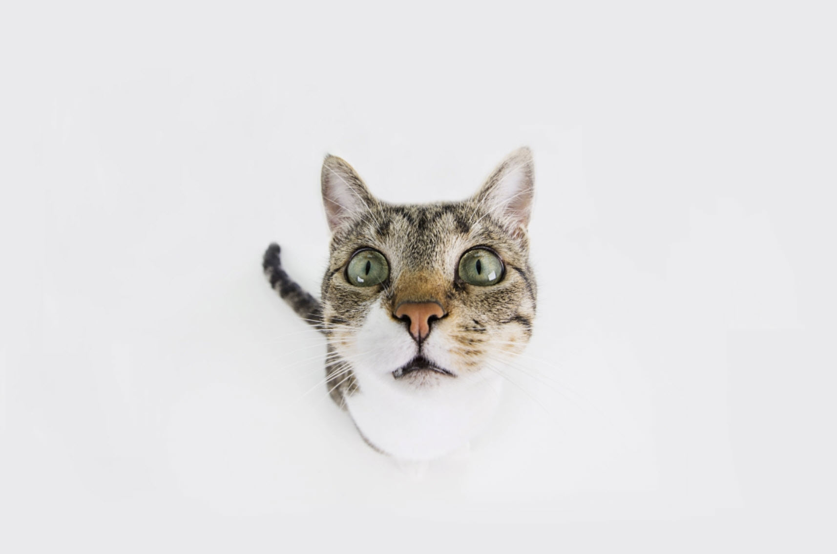 Blog Content: Why Do Cats Rule the Internet?